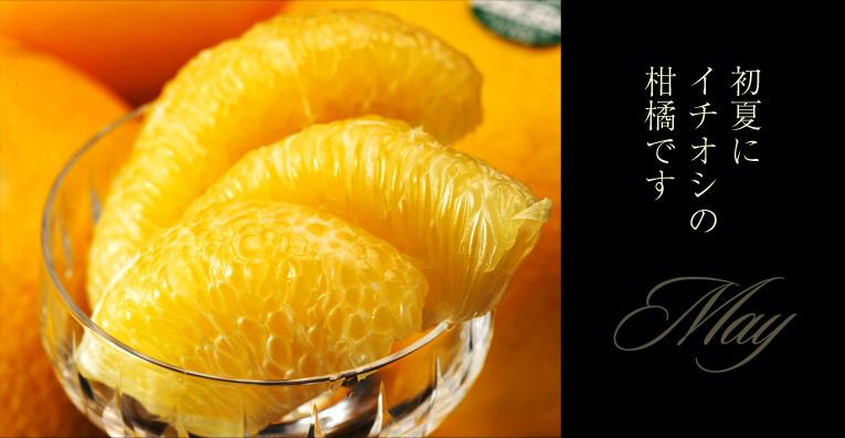 メイポメロ 初夏にイチオシの柑橘です