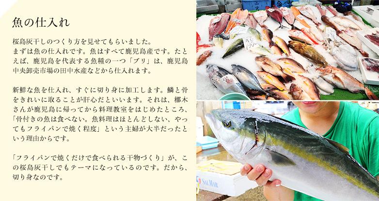 【魚の仕入れ】 桜島灰干しのつくり方を見せてもらいました。まずは魚の仕入れです。魚はすべて鹿児島産です。たとえば、鹿児島を代表する魚種の一つ「ブリ」は、鹿児島中央卸売市場の田中水産などから仕入れます。新鮮な魚を仕入れ、すぐに切り身に加工します。鱗と骨をきれいに取ることが肝心だといいます。それは、梛木さんが鹿児島に帰ってから料理教室をはじめたところ、「骨付きの魚は食べない。魚料理はほとんどしない、やってもフライパンで焼く程度」という主婦が大半だったという理由からです。「フライパンで焼くだけで食べられる干物づくり」が、この桜島灰干しでもテーマになっているのです。だから、切り身なのです。