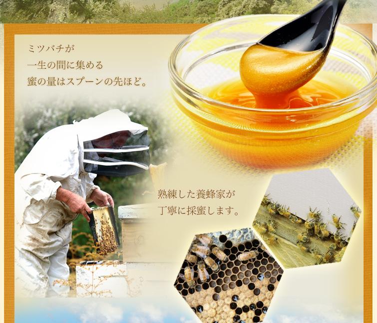 ミツバチが一生の間に集める蜜の量はスプーンの先ほど。熟練した養蜂家が丁寧に採蜜します。