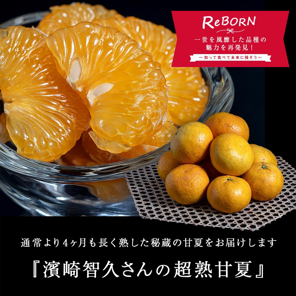 まさき 柑橘 は