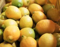 塩レモンは魔法の調味料 2012年5月号掲載