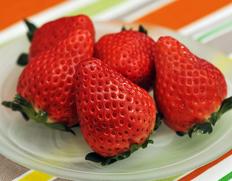 日本一の生産量を誇る「とちおとめ」 の後継品種として期待!新品種『スカイベリー』