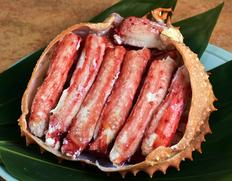 幻の蟹『イバラガニ』