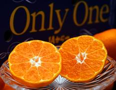 JAからつ最上級ブランドみかん糖度12度以上の『Only One』 お歳暮にもおすすめ!