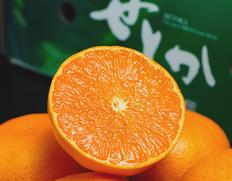高級柑橘「せとか」は溢れんばかりの果汁が魅力